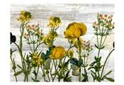 Wildflower Jar 5