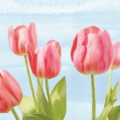 Fresh Spring Tulips I