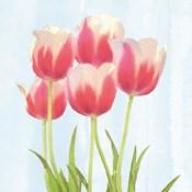 Fresh Spring Tulips III