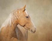 Silk - Mustang Mare
