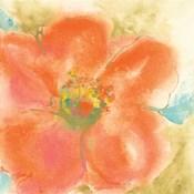 Coral Poppy II