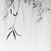 Willow Print No. 1
