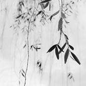 Willow Print No. 3