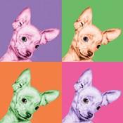 Sweet Chihuahua Pop