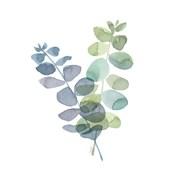 Natural Inspiration Blue Eucalyptus on White I