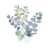 Natural Inspiration Blue Eucalyptus on White II