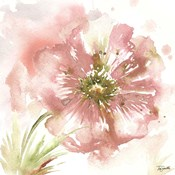 Blush Watercolor Poppy I