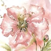 Blush Watercolor Poppy II