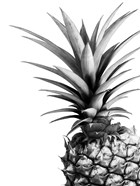 Pineapple (BW)