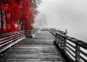 Fall Walkway
