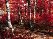 Red Trees Path