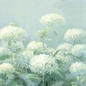 White Hydrangea Garden Sage Crop