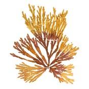 Pacific Sea Mosses XIX White Sq