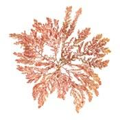 Pacific Sea Mosses IV White Sq