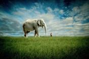 Elephant Follow Me