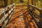 Fall On The Footbridge