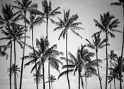 Palm Heaven
