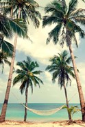 Palm Sky 3