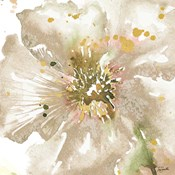 Neutral Watercolor Poppy Close Up II