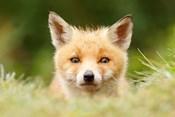 Bad Fur Day