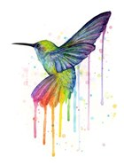 Rainbow Hummingbird