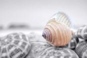 Crescent Beach Shells 15
