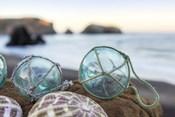 Crescent Beach Shells 16
