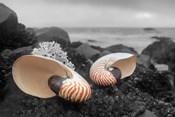 Crescent Beach Shells 2