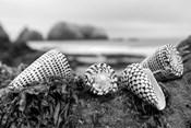 Crescent Beach Shells 3