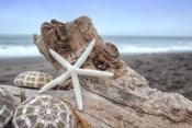Crescent Beach Shells 6