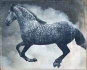 Horse Exposures III