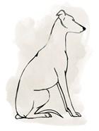 Greyhound Sketch I
