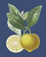 French Lemon on Navy II