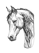 Equine Contour II