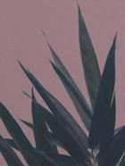 Bamboo Pink II