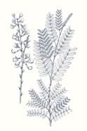 Indigo Botany Study VII