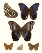 Violet Butterflies IV