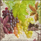 Vintage Fruits II Grapes