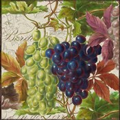 Vintage Fruits III Grapes