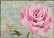 Pink Rose With Grasshopper I