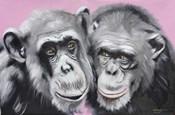 Loving Chimps