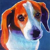 Beagle - Chase