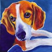 Beagle - Peyton