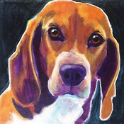 Beagle - Woody
