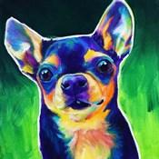 Chihuahua - Jack