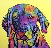 Fixate Labrador