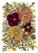 Dried Flowers 23