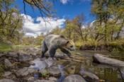 Grizzly Bear Creek