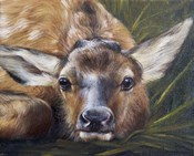 Portrait of a Fawn