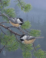 Pine Tree Chatter